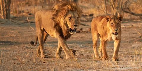 6-Day Kalahari Bushmen Tour, Okavango Delta and Chobe