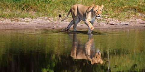 3-Day Leopard Trail