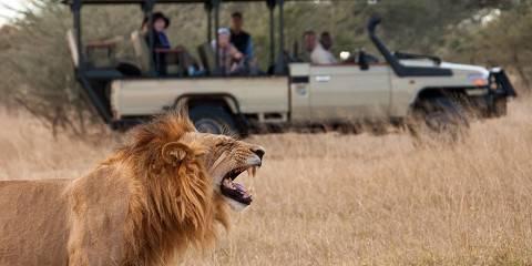 9-Day Victoria Falls, Chobe and Okavango Fly-in Safari