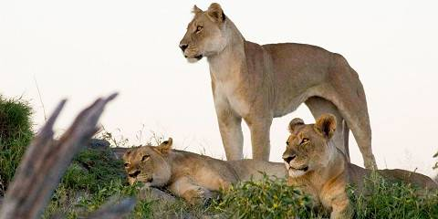 4-Day Chobe Wildlife Experience 22nd Sept 2020