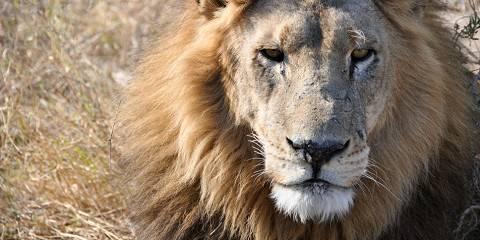 12-Day Extreme Wildlife Experience Botswana/Namibia