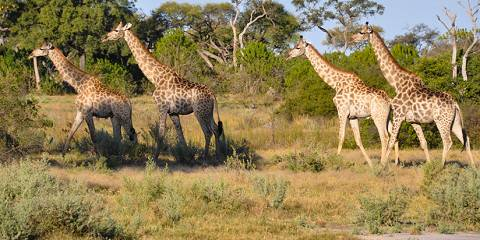 10-Day Botswana and Victoria Falls Fly-in Safari