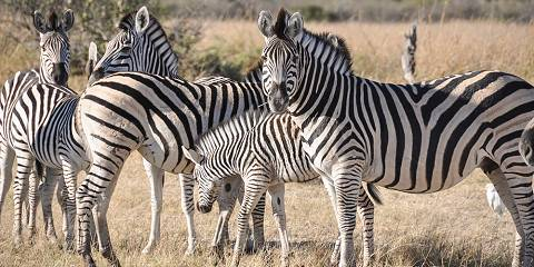 5-Day Magical Moremi and Okavango Delta
