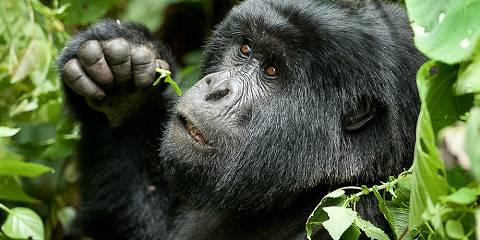 12-Day Budget Rwanda, Congo, Uganda and Nyiragongo Trek