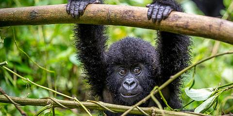 3-Day Gorilla Trekking in Virunga National Park in Congo