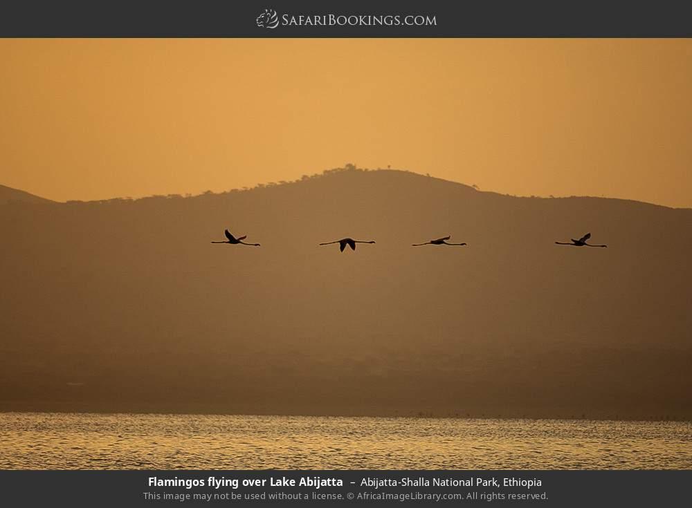 Flamingos flying over Lake Abijatta in Abijatta-Shalla National Park, Ethiopia