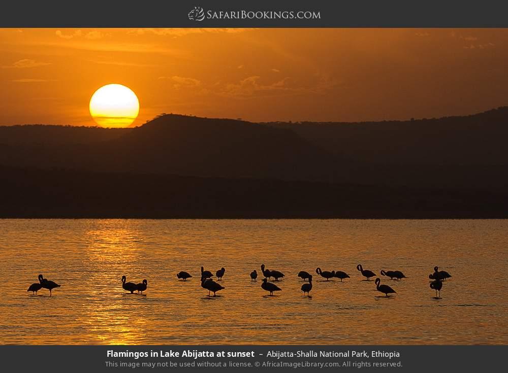 Flamingos in Lake Abijatta at sunset in Abijatta-Shalla National Park, Ethiopia