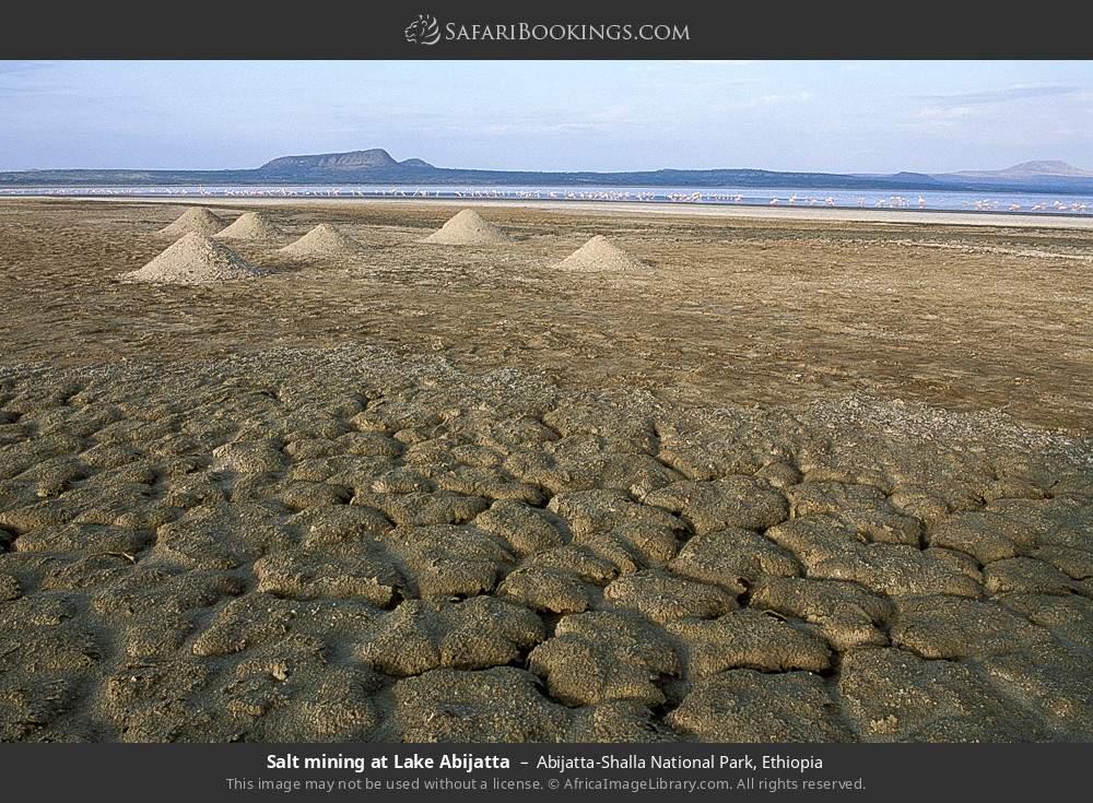 Salt mining at Lake Abijatta in Abijatta-Shalla National Park, Ethiopia