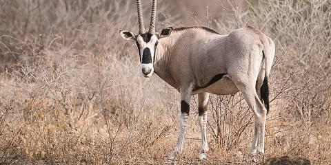 3-Day Wildlife Safari to Awash National Park