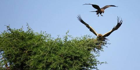 12-Day Best of Ethiopia Birding Tour Around