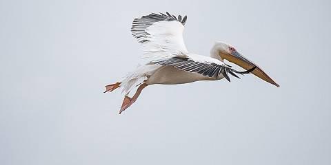 11-Day Birding in Ethiopia