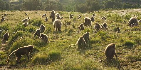 Menze Guassa Eco Trekking