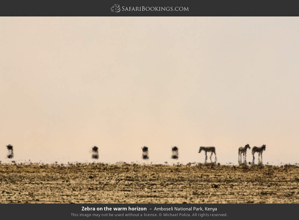 Zebra on the warm horizon in Amboseli National Park, Kenya