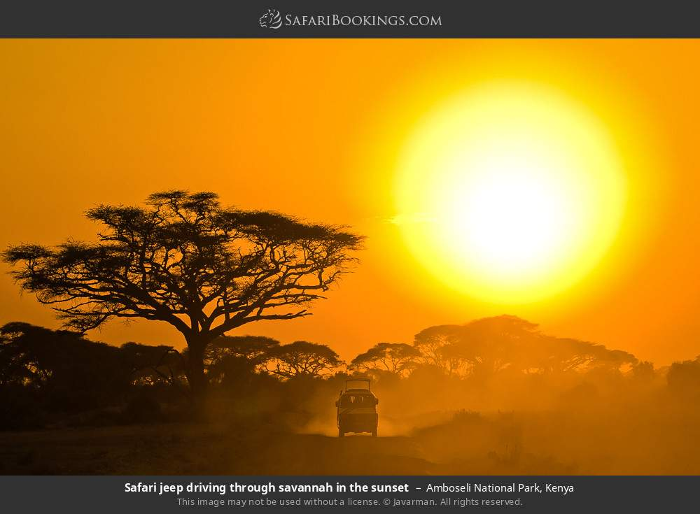 Safari jeep driving through savannah in the sunset in Amboseli National Park, Kenya