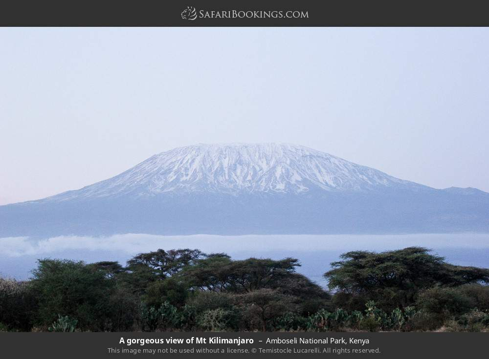 A gorgeous view of Mount Kilimanjaro in Amboseli National Park, Kenya