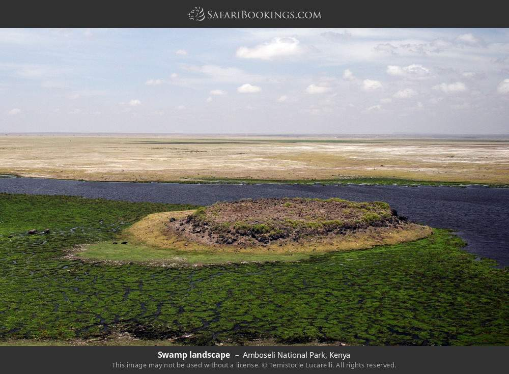 Swamp landscape in Amboseli National Park, Kenya