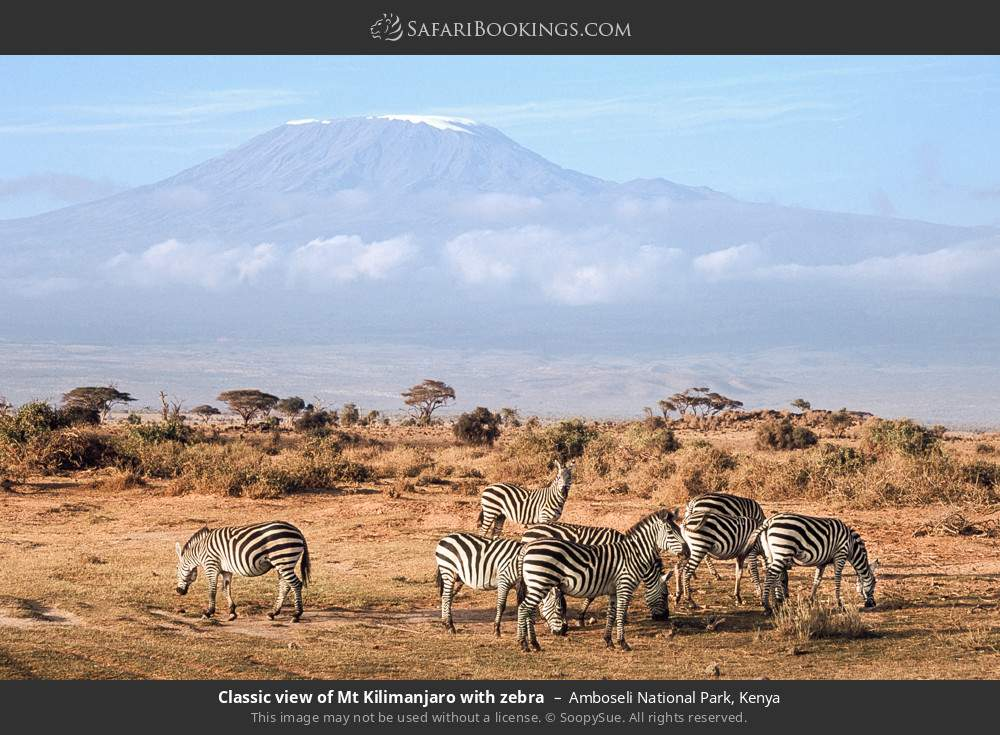 Classic view of Mount Kilimanjaro with zebra in Amboseli National Park, Kenya