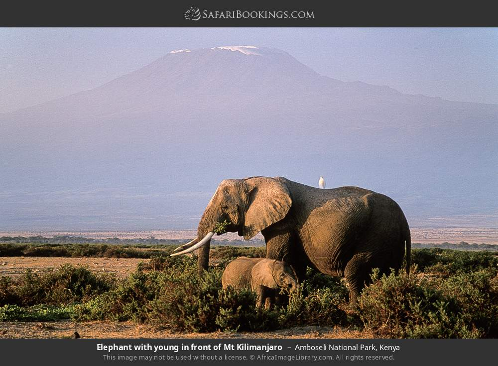 Elephant with young in front of Mt Kilimanjaro in Amboseli National Park, Kenya