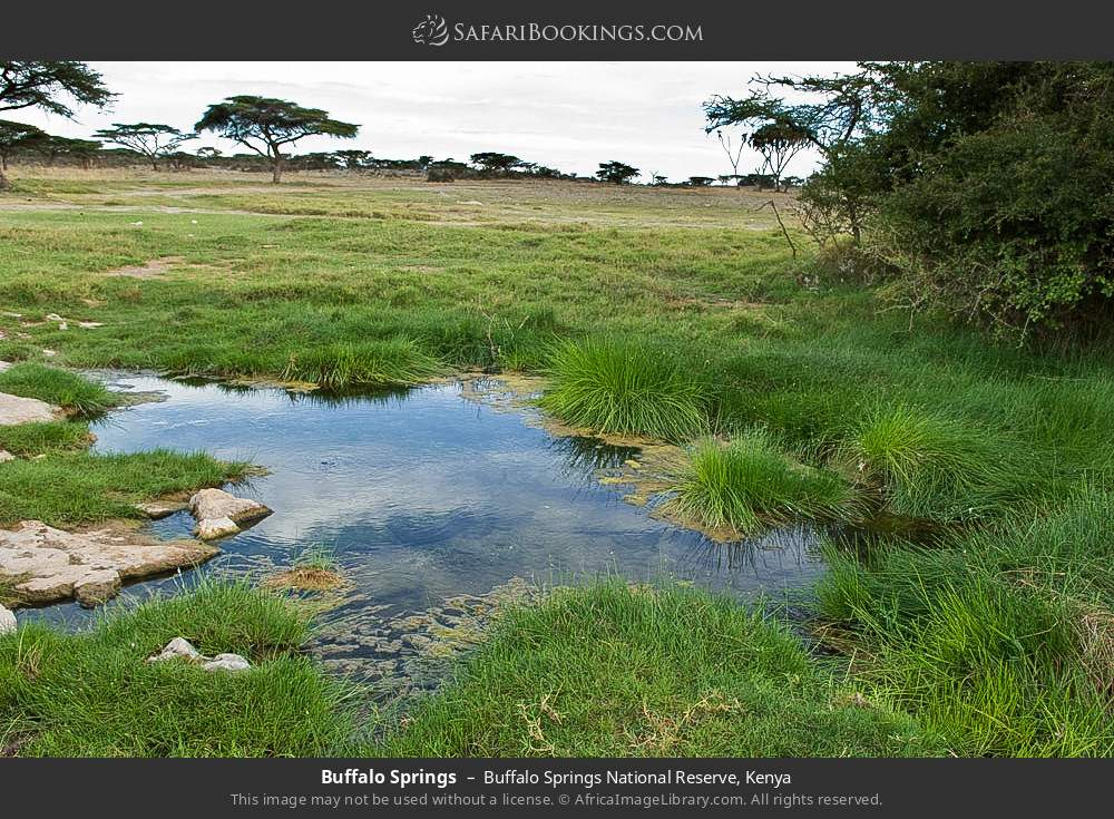 Buffalo springs in Buffalo Springs National Reserve, Kenya