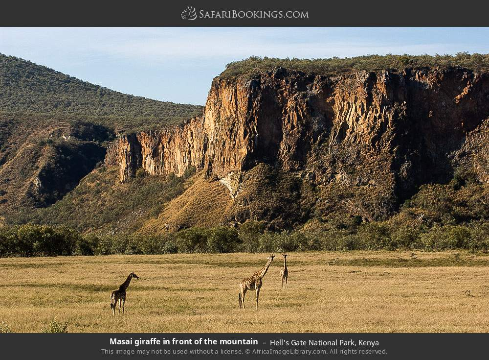 Masai giraffe in front of the mountain in Hell's Gate National Park, Kenya