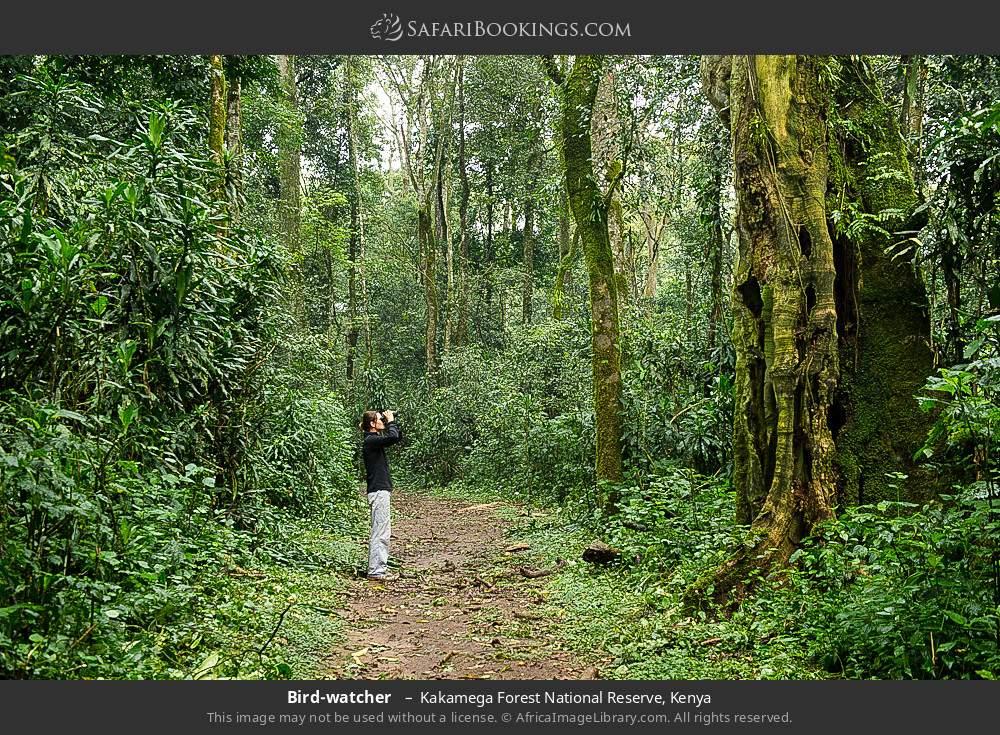 Birdwatcher  in Kakamega Forest National Reserve, Kenya