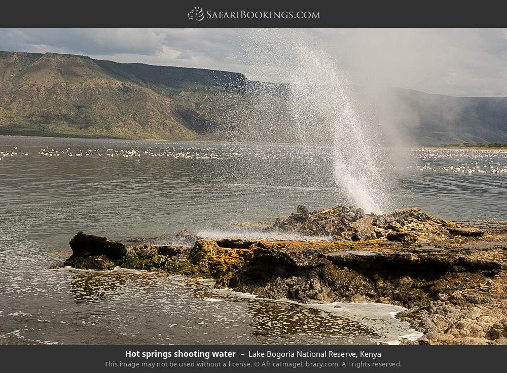 Hot springs shooting water in Lake Bogoria National Reserve, Kenya