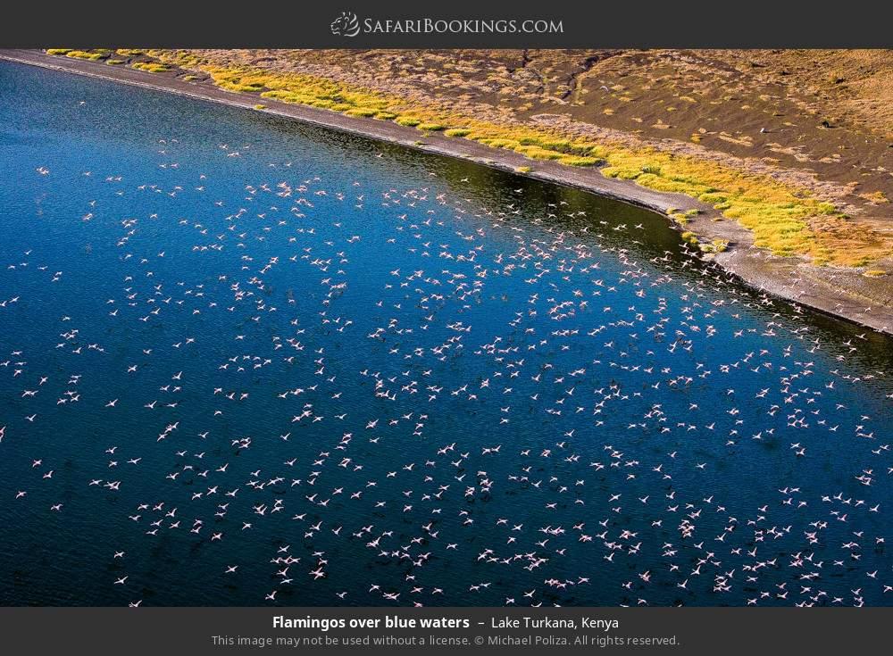 Flamingos over blue waters in Lake Turkana, Kenya