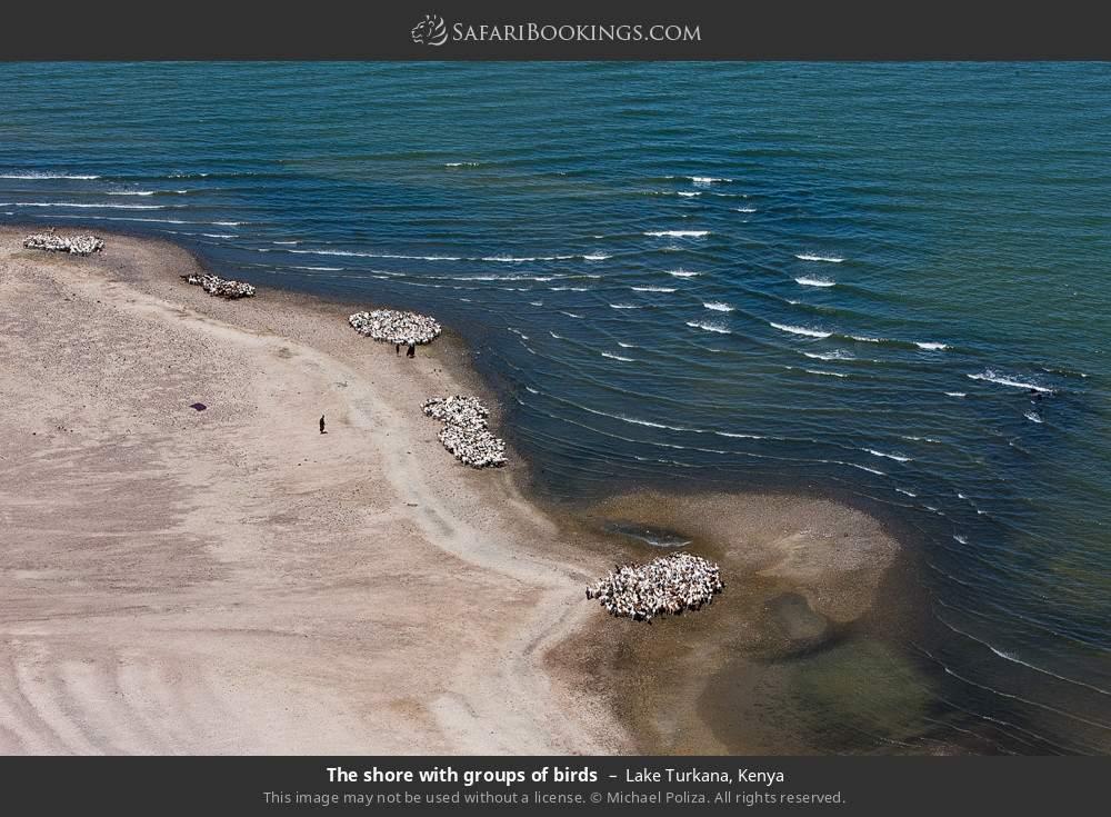 The shore with groups of birds in Lake Turkana, Kenya