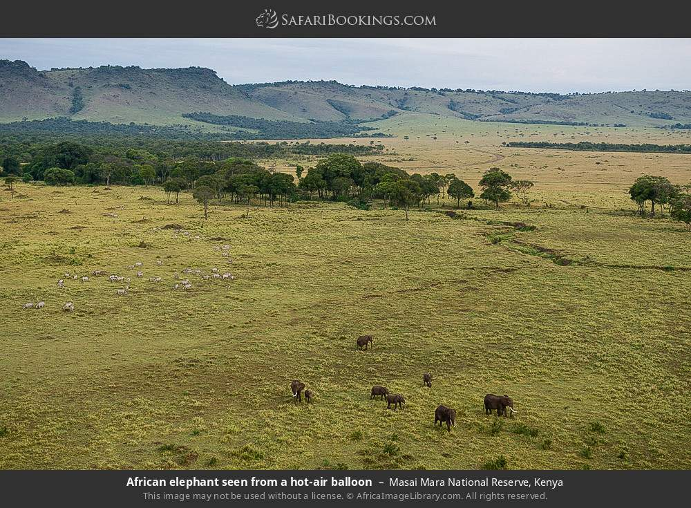 African elephant seen from a hot-air balloon in Masai Mara National Reserve, Kenya