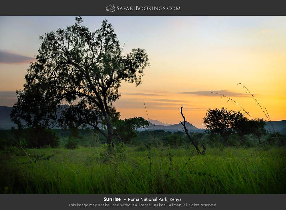 Sunrise in Ruma National Park, Kenya