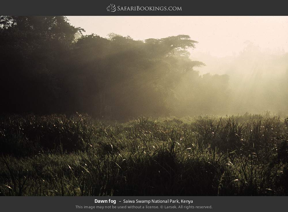 Dawn fog in Saiwa Swamp National Park, Kenya