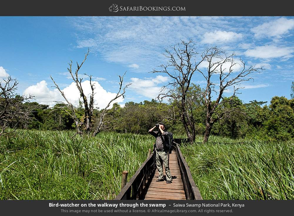 Birdwatcher on the walkway through the swamp in Saiwa Swamp National Park, Kenya