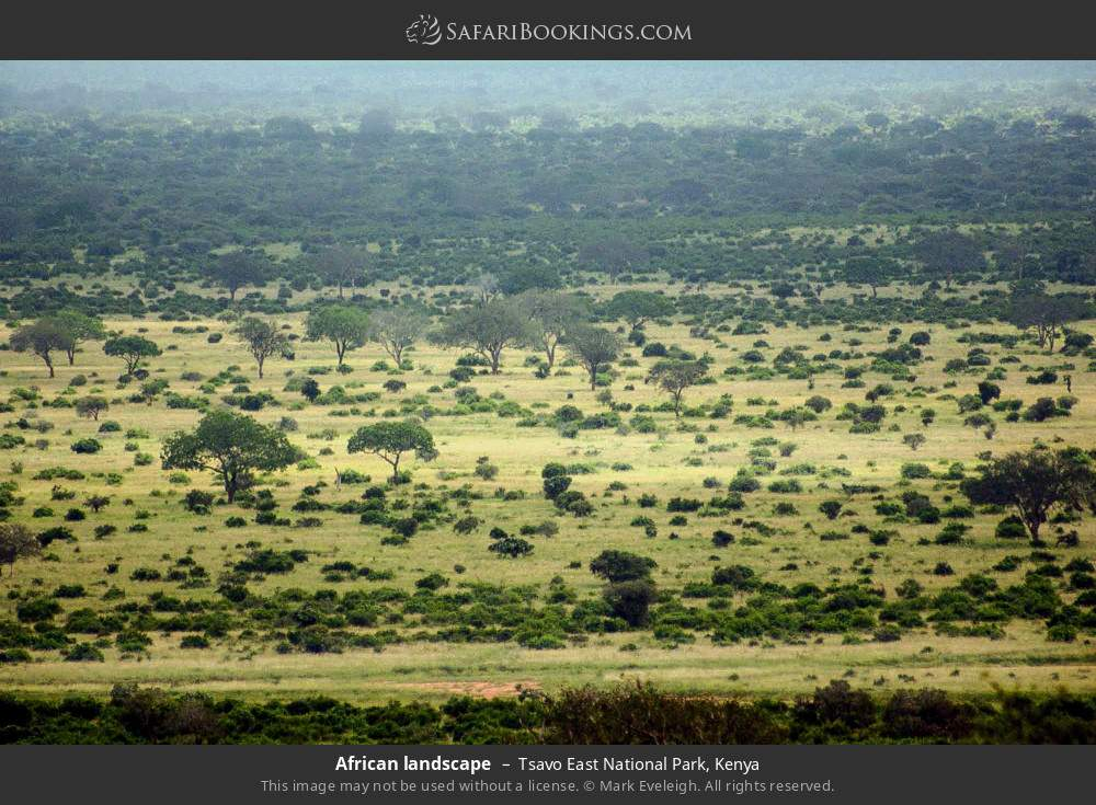 African landscape in Tsavo East National Park, Kenya