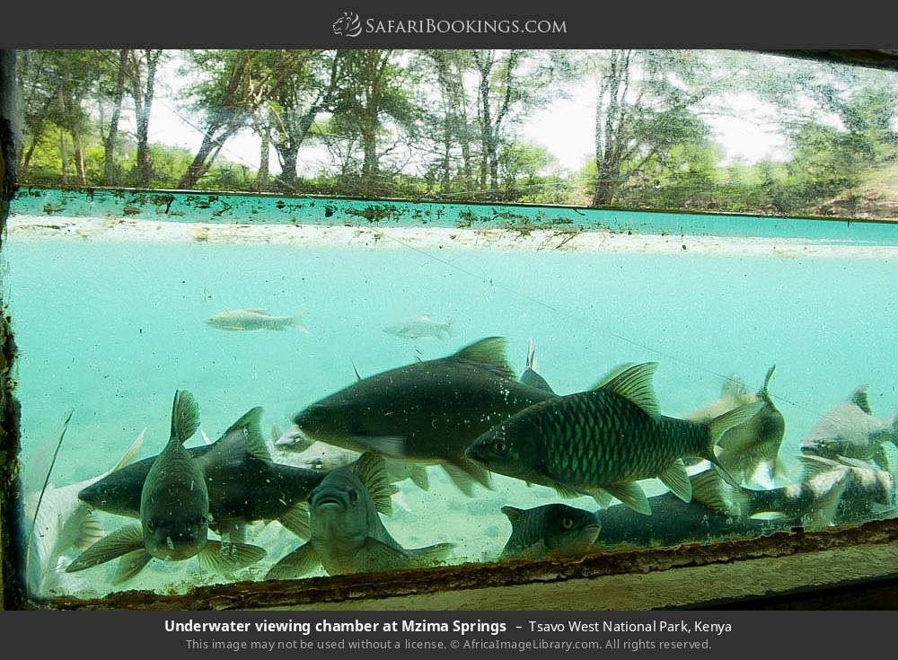 Underwater viewing chamber at Mzima Springs in Tsavo West National Park, Kenya