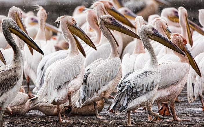 Open Photos