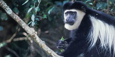 8-Day Best of Western Kenya and Safari