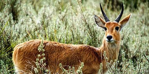 5-Day Amboseli, Nakuru and Maasai Mara Kenya