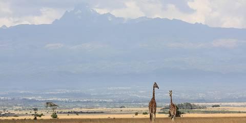 Samburu Reserve/Ol Pejeta/Naivasha and Masai Mara