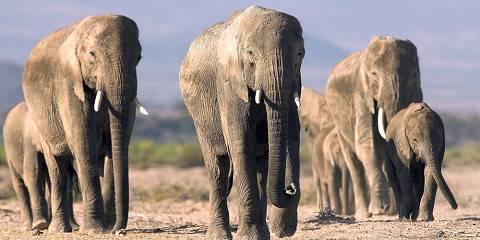3-Day Amboseli Flight Package Safari