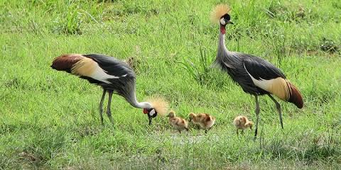 10-Day Southern Tanzania Safari Tour