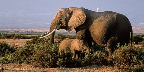 9-Day All-in Kenya Wildlife Safari