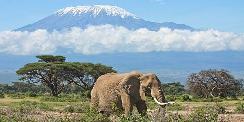 6-Day Amboseli, Lake Naivasha and Mara - Mid-Range