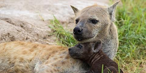 3-Day Masai Mara Luxury Tented Safari
