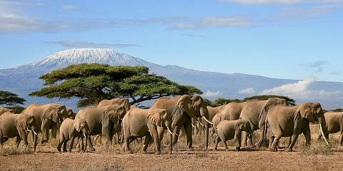 3-Day Amboseli Expedition