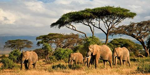 5-Day Luxury Road Safari - Amboseli/Nakuru/Masai Mara