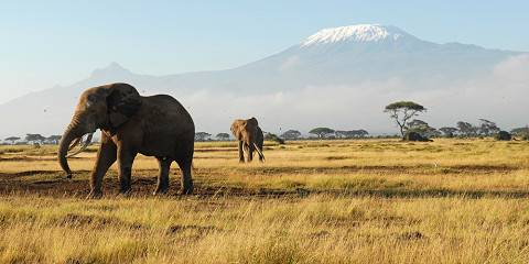 3-Day Amboseli National Park Safari Adventure