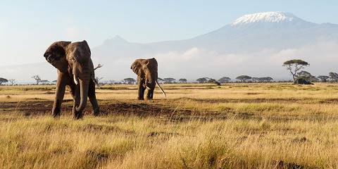 7-Day Mara, Nakuru, Naivasha and Amboseli Lodge Tour