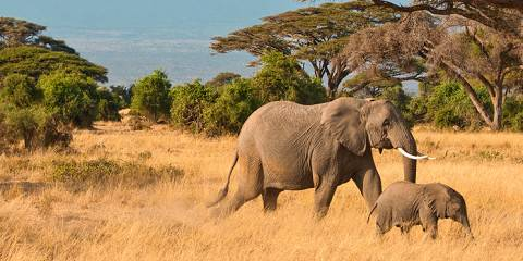 3-Day Amboseli National Park - Land of Giants