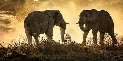 11-Day Best of Kenya by Source Africa