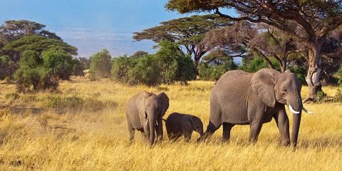 6-Day Spectacular Masai Mara-Lake Nakuru-Amboseli Safari